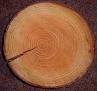 Трещина в древесине